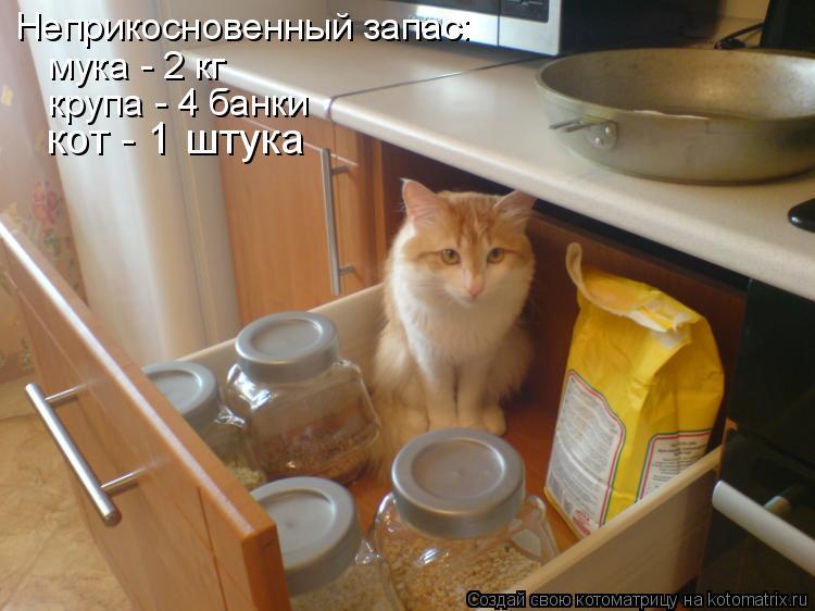 Котоматрица: Неприкосновенный запас: мука - 2 кг крупа - 4 банки кот - 1 штука