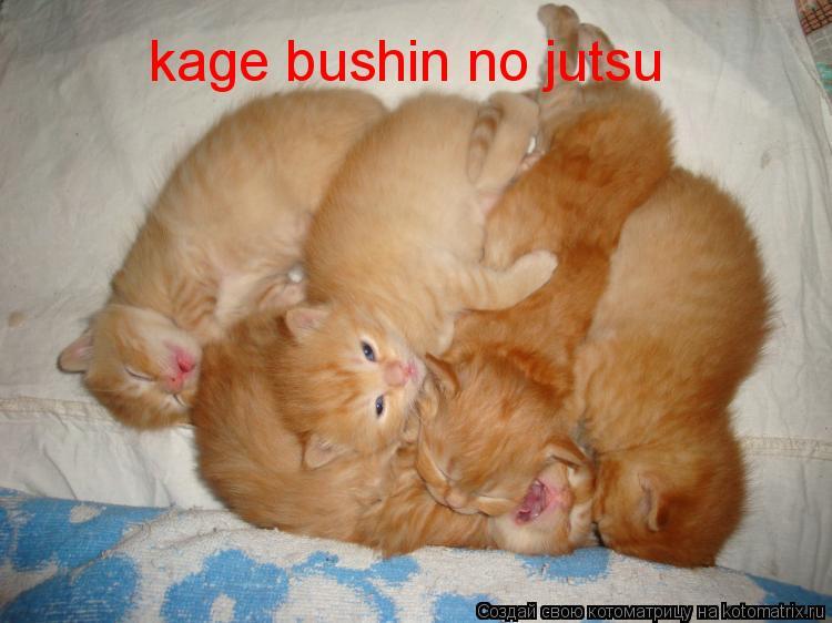 Котоматрица: kage bushin no jutsu
