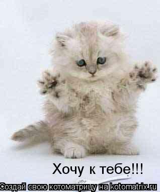 Котоматрица: Хочу к тебе!!!