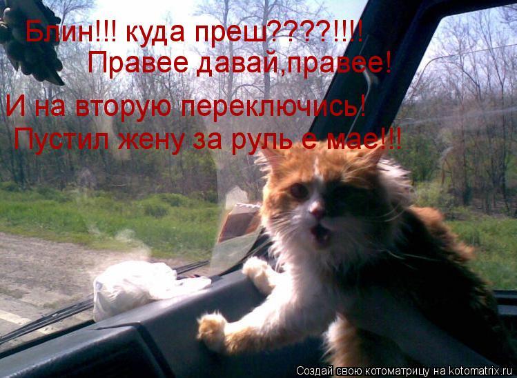 Котоматрица: Блин!!! куда преш????!!!! Правее давай,правее!  И на вторую переключись! Пустил жену за руль е мае!!!