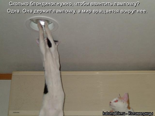 Котоматрица: Одна. Она деpжит лампочку, а миp вpащается вокpуг нее.  Сколько блондинок нужно, чтобы ввинтить лампочку?