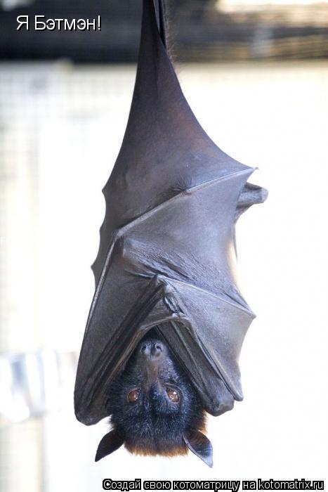 Котоматрица: Я Бэтмэн!