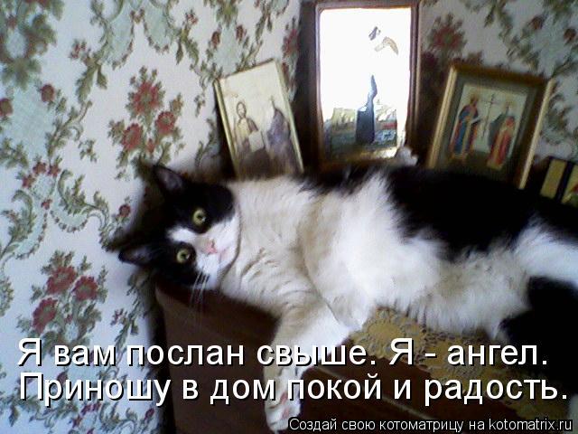 Котоматрица: Я вам послан свыше. Я - ангел. Приношу в дом покой и радость.