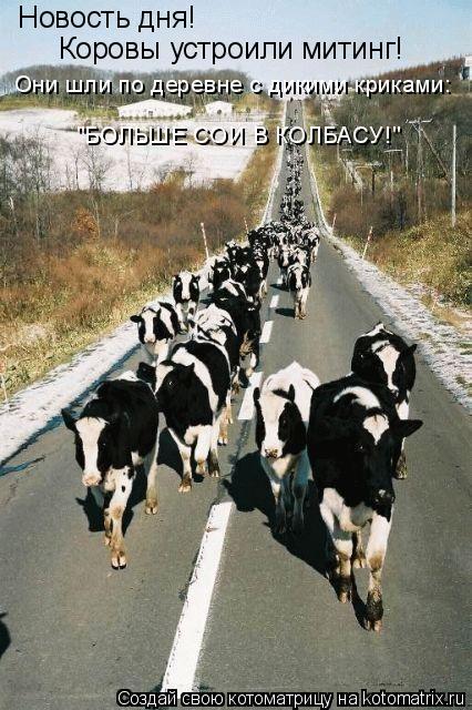 """Котоматрица: Новость дня! Коровы устроили митинг! Они шли по деревне с дикими криками: """"БОЛЬШЕ СОИ В КОЛБАСУ!"""""""