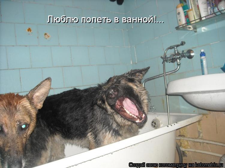 Котоматрица: Люблю попеть в ванной!...