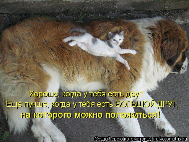 Котоматрица: Хорошо, когда у тебя есть друг! Ещё лучше, когда у тебя есть БОЛЬШОЙ ДРУГ,  на которого можно положиться!