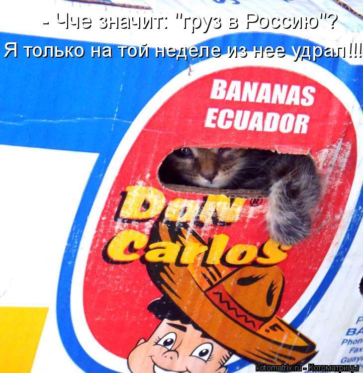 """Котоматрица: - Чче значит: """"груз в Россию""""? Я только на той неделе из нее удрал!!!"""