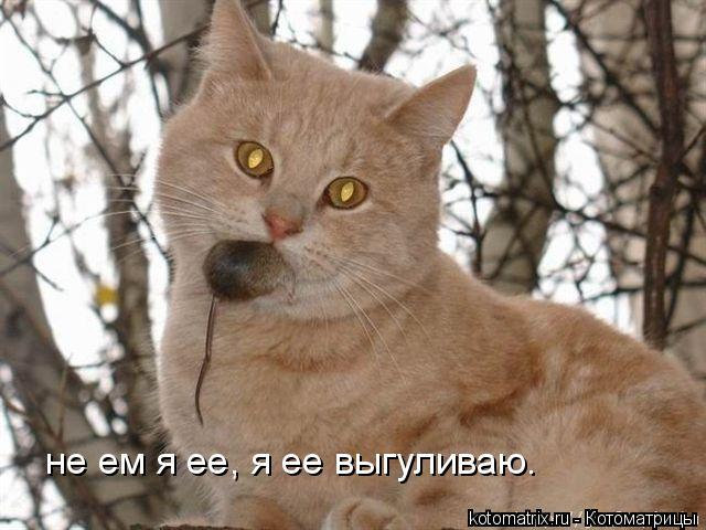 Котоматрица: не ем я ее, я ее выгуливаю.