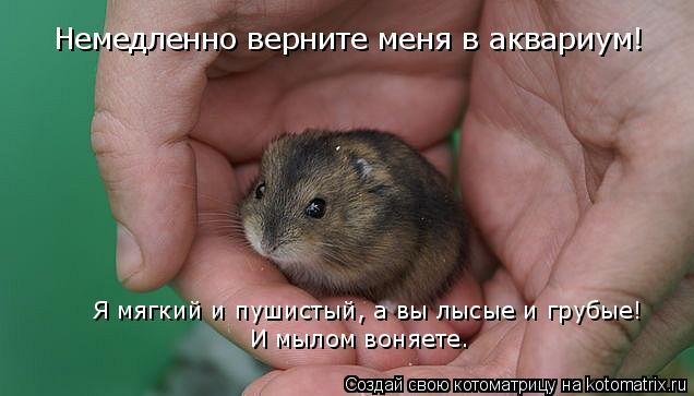 Котоматрица: Немедленно верните меня в аквариум! Я мягкий и пушистый, а вы лысые и грубые! И мылом воняете.
