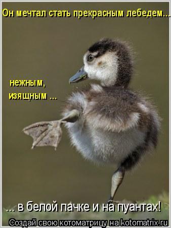 Котоматрица: Он мечтал стать прекрасным лебедем... нежным,  изящным ...  ... в белой пачке и на пуантах!