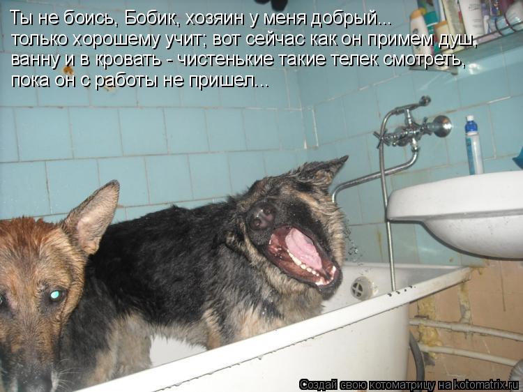 Котоматрица: Ты не боись, Бобик, хозяин у меня добрый... только хорошему учит; вот сейчас как он примем душ, ванну и в кровать - чистенькие такие телек смотр