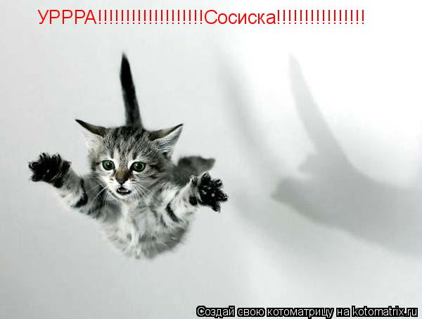 Котоматрица: УРРРА!!!!!!!!!!!!!!!!!!!Сосиска!!!!!!!!!!!!!!!!