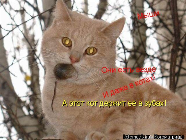 Котоматрица: Мыши Они есть везде И даже в котах! А этот кот держит её в зубах!