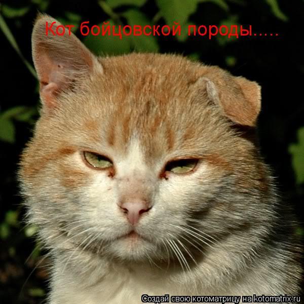 Котоматрица: Кот бойцовской породы.....
