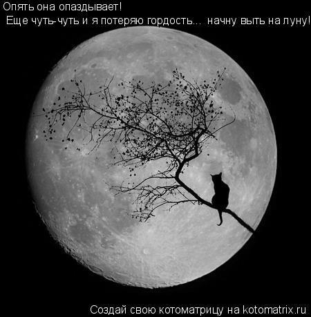 Котоматрица: Опять она опаздывает!  Еще чуть-чуть и я потеряю гордость...  начну выть на луну!