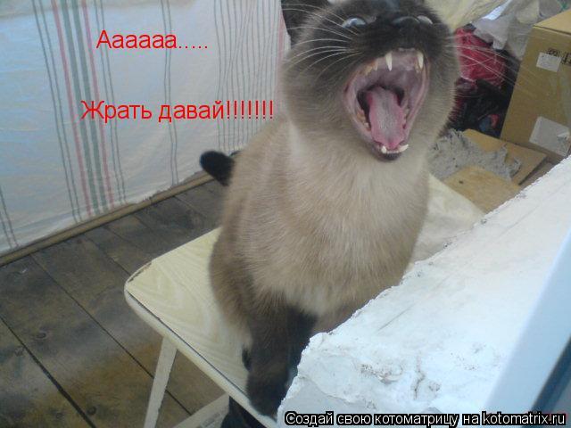 Котоматрица: Аааааа..... Жрать давай!!!!!!!