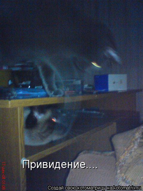 Котоматрица: Привидение....