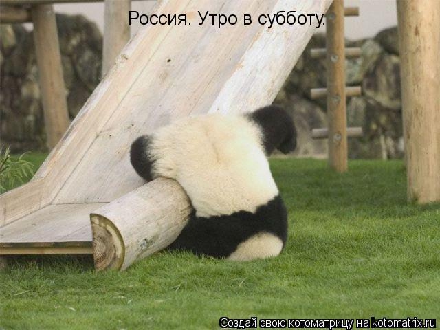 Котоматрица: Россия. Утро в субботу.
