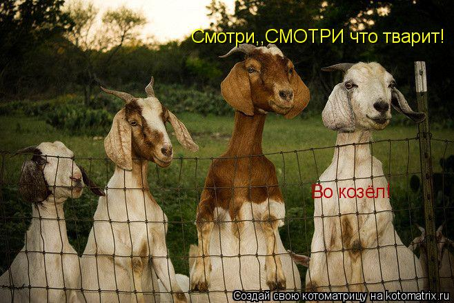 Котоматрица: Смотри,,СМОТРИ что тварит! Во козёл!