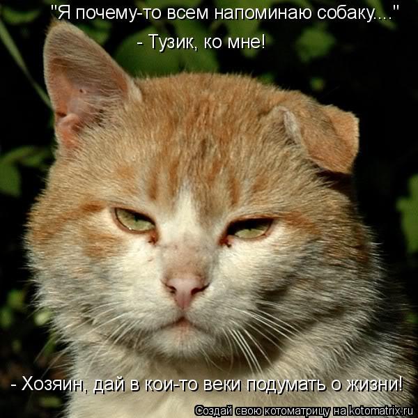 """Котоматрица: - Тузик, ко мне! """"Я почему-то всем напоминаю собаку...."""" - Хозяин, дай в кои-то веки подумать о жизни!"""