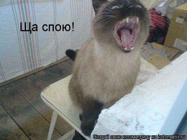 Котоматрица: Ща спою!