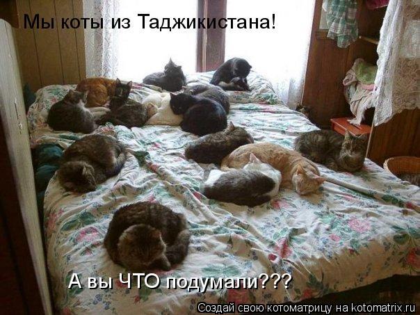 Котоматрица: Мы коты из Таджикистана! А вы ЧТО подумали???