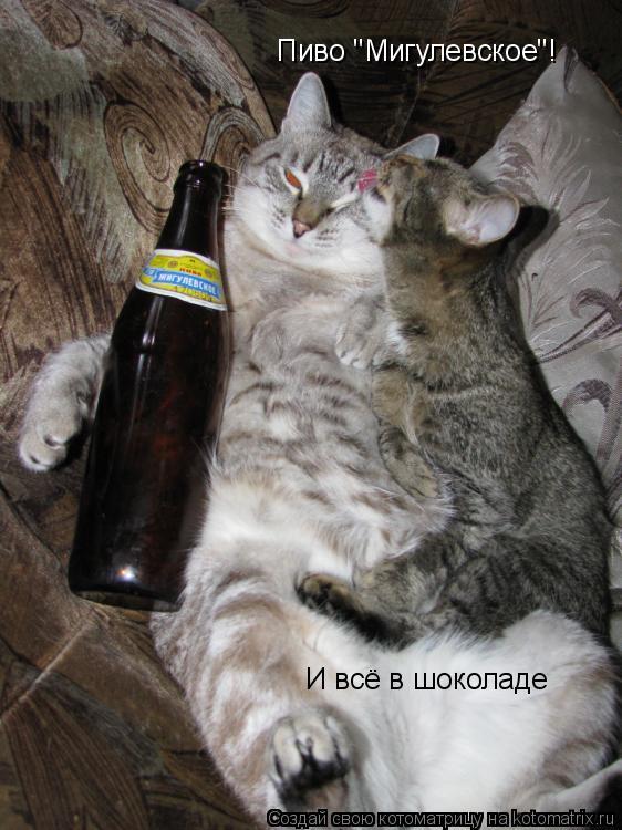 """Котоматрица: Пиво """"Мигулевское""""! И всё в шоколаде"""
