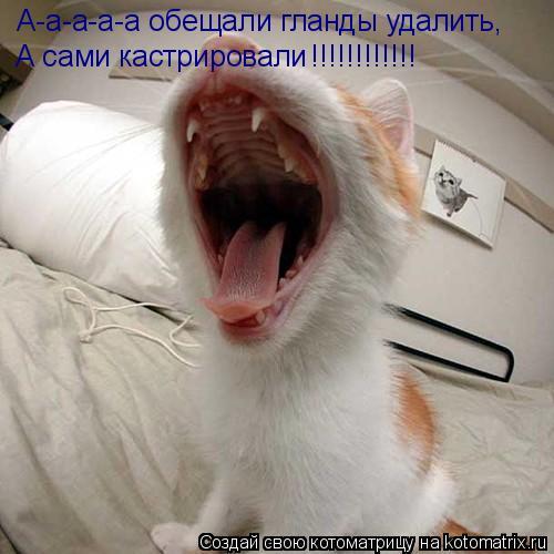 Котоматрица: А-а-а-а-а обещали гланды удалить, А сами кастрировали !!!!!!!!!!!!