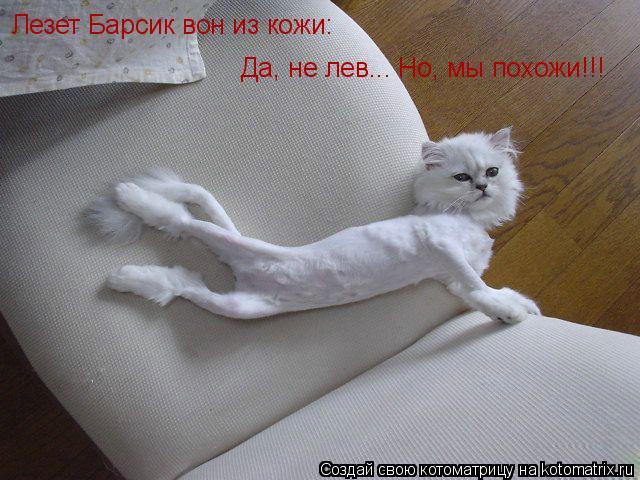 Котоматрица: Лезет Барсик вон из кожи: Да, не лев... Но, мы похожи!!!