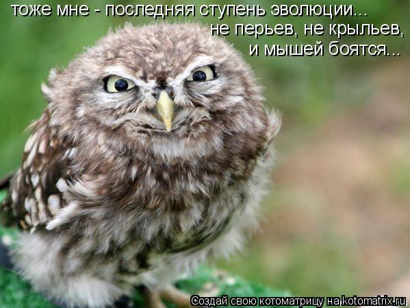 Котоматрица: тоже мне - последняя ступень эволюции... не перьев, не крыльев, и мышей боятся...