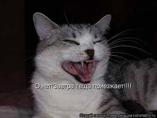 Котоматрица: О,нет!Завтра тёща приезжает!!!!