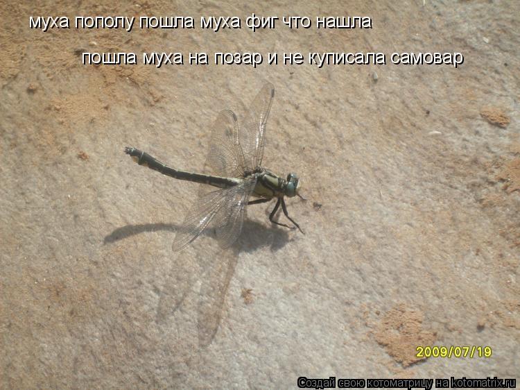 Котоматрица: муха пополу пошла муха фиг что нашла пошла муха на позар и не куписала самовар