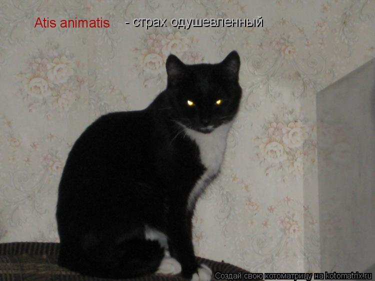 Котоматрица: Atis animatis - страх одушевленный