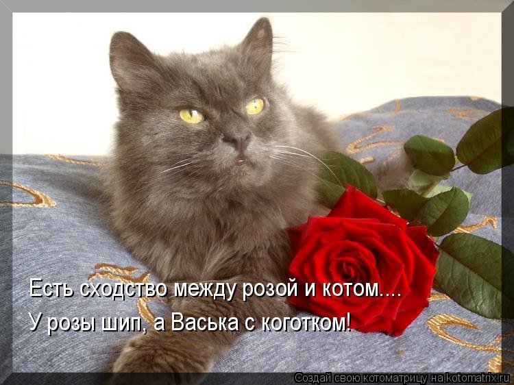 Котоматрица: Есть сходство между розой и котом.... У розы шип, а Васька с коготком!