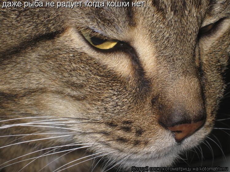 Котоматрица: даже рыба не радует когда кошки нет