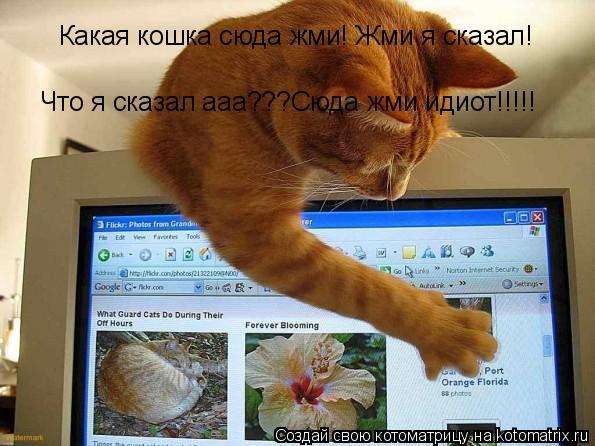 Котоматрица: Какая кошка сюда жми! Жми я сказал! Что я сказал ааа???Сюда жми идиот!!!!!