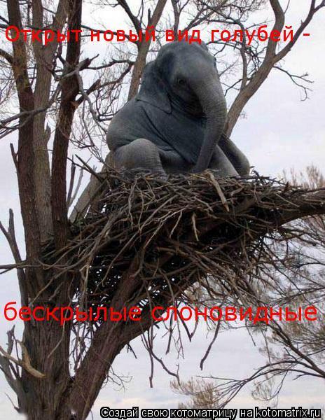 Котоматрица: Открыт новый вид голубей -  бескрылые слоновидные