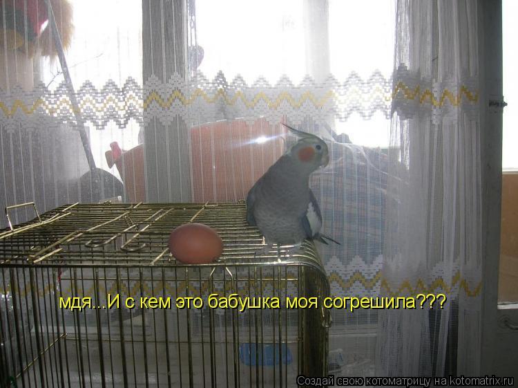 Котоматрица: мдя...И с кем это бабушка моя согрешила???