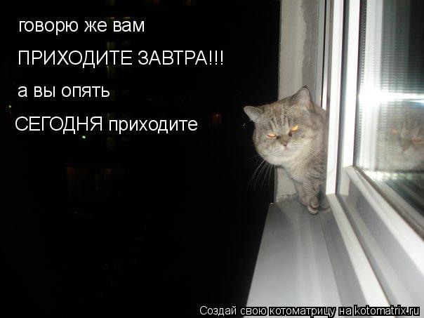 Котоматрица: говорю же вам  ПРИХОДИТЕ ЗАВТРА!!! а вы опять СЕГОДНЯ приходите