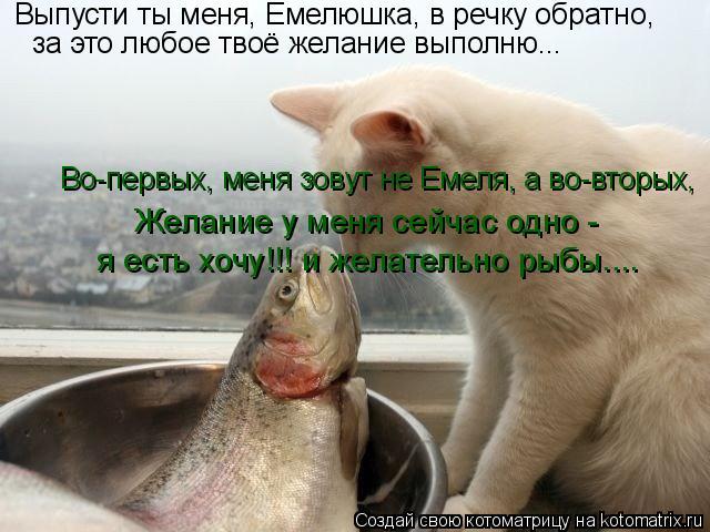 Котоматрица: Выпусти ты меня, Емелюшка, в речку обратно, за это любое твоё желание выполню... Во-первых, меня зовут не Емеля, а во-вторых, Желание у меня сей