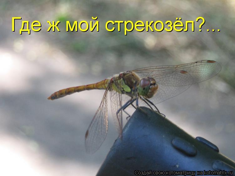 Котоматрица: Где ж мой стрекозёл?...