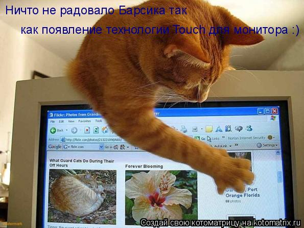 Котоматрица: Ничто не радовало Барсика так как появление технологии Touch для монитора :)