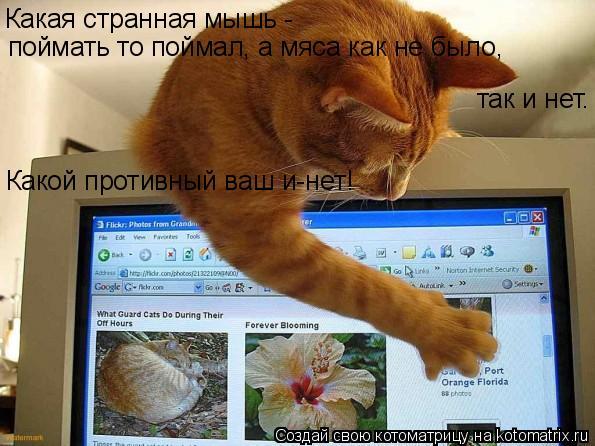 Котоматрица: Какая странная мышь -  поймать то поймал, а мяса как не было, так и нет. Какой противный ваш и-нет!