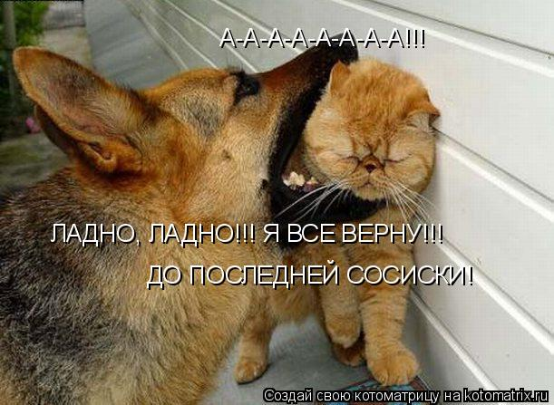 Котоматрица: А-А-А-А-А-А-А-А!!! ЛАДНО, ЛАДНО!!! Я ВСЕ ВЕРНУ!!! ДО ПОСЛЕДНЕЙ СОСИСКИ!