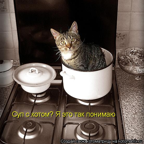 Котоматрица: Суп с котом? Я это так понимаю