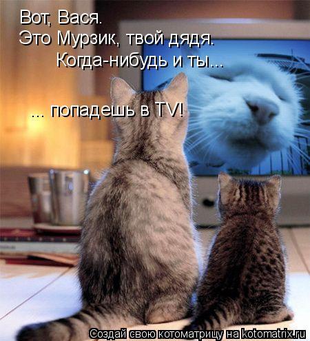 Котоматрица: Вот, Вася. Это Мурзик, твой дядя. Когда-нибудь и ты... ... попадешь в TV!