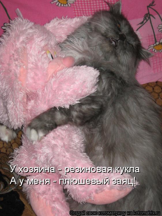 Котоматрица: У хозяина - резиновая кукла А у меня - плюшевый заяц!