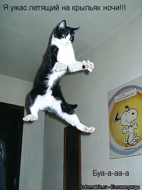 Котоматрица: Я ужас летящий на крыльях ночи!!! Буа-а-аа-а