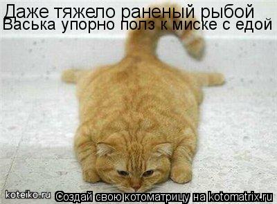 Котоматрица: Даже тяжело раненый рыбой  Васька упорно полз к миске с едой