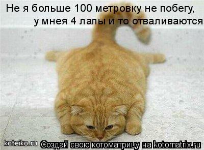 Котоматрица: Не я больше 100 метровку не побегу у мнея 4 лапы и то отваливаются! ,